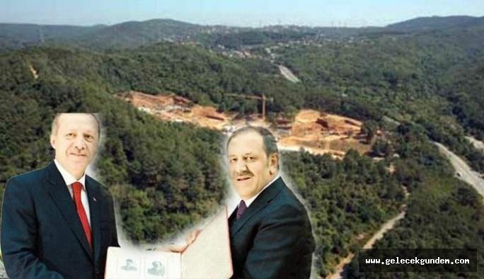 İstanbul'un ciğerlerini yok edecek 553 villa için ÇED'e gerek görülmedi!