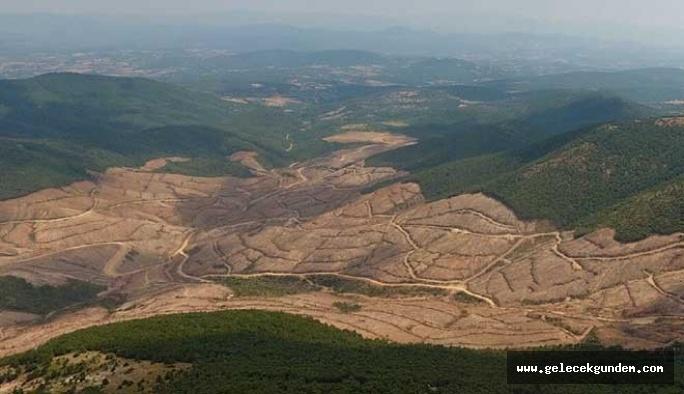 Kaz Dağları'nda ağaç katliamı yapan maden şirketine 865 milyon Lira teşvik verilmiş